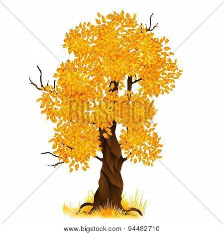 Vector autumn tree isolated on white, vector illustration
