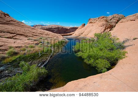 Small Lake Oasis In The Desert Escalante National