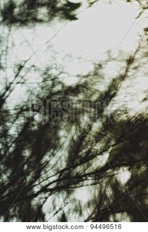 Background With Blurred Tree Branches