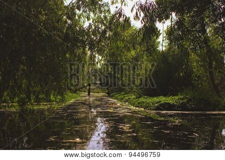 Shady River