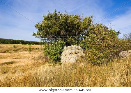 Big Stone Near The Tree