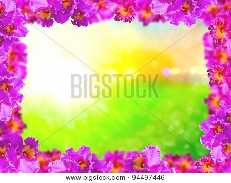 Flora Frame Of Beauty Pink Orchids
