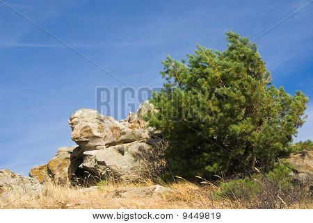 Pine And Stones