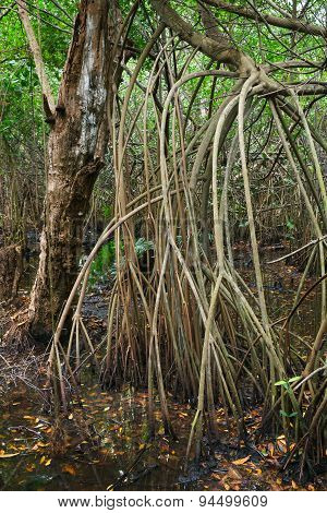 Mangrove Trees Growing In The Water. Vertical Photo