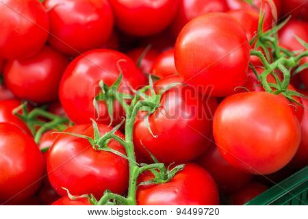 Fresh juicy tomatoes on the branches. Background of red tomatoes