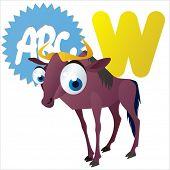 foto of wildebeest  - animal children alphabet - JPG