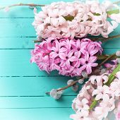 image of willow  - Background with fresh pink hyacinths and willow on green painted wooden planks - JPG