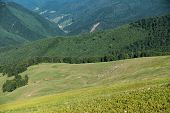 picture of pasture  - Herd of sheep on pasture in beautiful spring Ukrainian mountains  - JPG