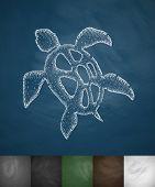 foto of turtle shell  - turtle icon - JPG