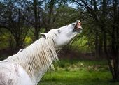 image of stallion  - The stallion gets his mares to the rapport - JPG