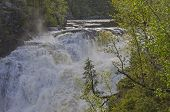 pic of waterfalls  - Small spruce above a big waterfall - JPG