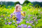 stock photo of country girl  - Child picking wild flowers in field - JPG