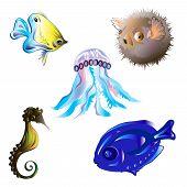picture of jellyfish  - Set sea - JPG