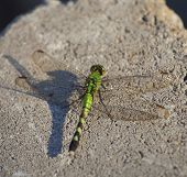 image of dragonflies  - Green dragonfly that is resting on a grey brick - JPG