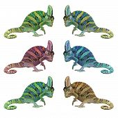 pic of chameleon  - exotic color chameleon or calyptratus isolated on white background - JPG