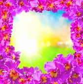 image of debonair  - Frame of Beautiful Pink Orchids on Soft and blurred background - JPG