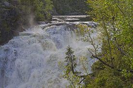 stock photo of murmansk  - Small spruce above a big waterfall - JPG