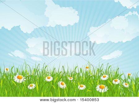 Summer meadow. Vector background.
