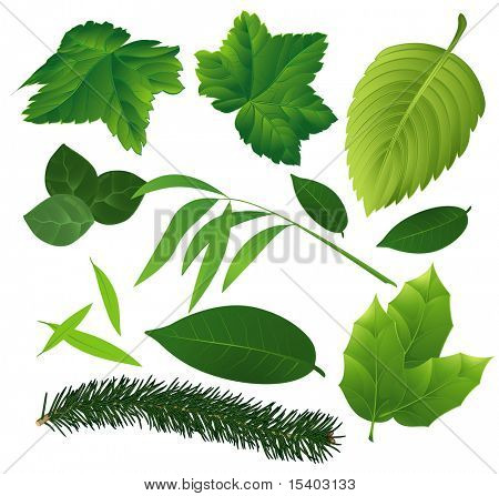 Leaves collection. Vector.