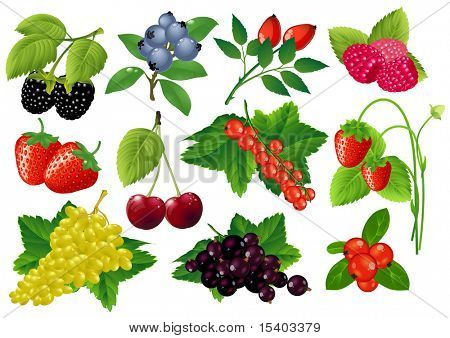 Vector berries huge collection.