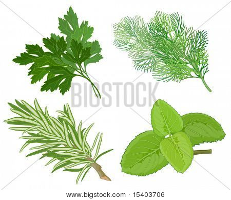 Aroma herbs. Vector.