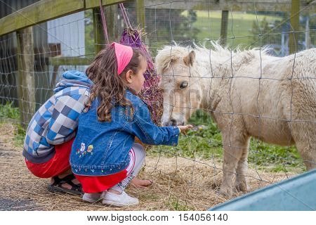 Little kids feeding pony horse on an animal farm. Cute young boy and girl feeding pony horse in farm. Active leisure with children outdoors. Child feeds pony horse at pet zoo.