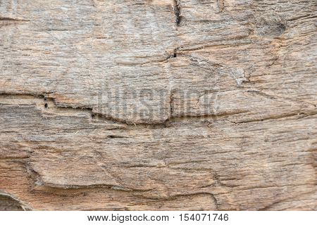 Wood texture background close up. On the photo texture of an old tree