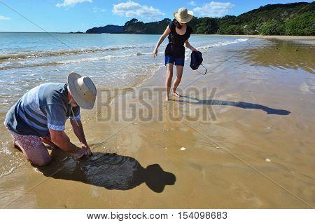 Food-cuisine-seafood-sea-tuatua-shelfish