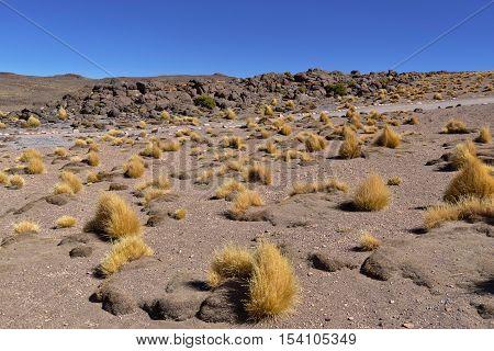 Vegetation on the banks of Salar de Tara.