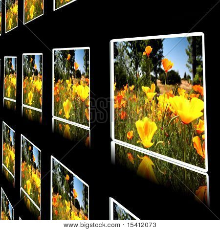 Flat Screens Display, Photograph In My Portfolio