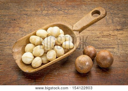 scoop of shelled macadamia nuts on rustic grunge wood wood  with a few nuts in shells