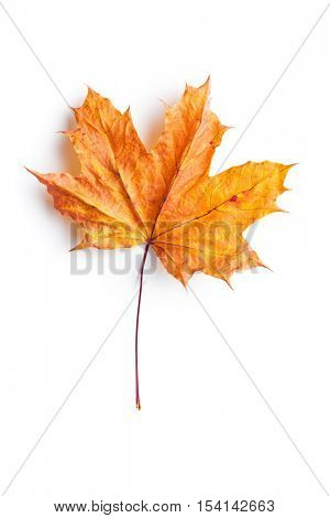 Colorful autumn leaf isolated on white background.
