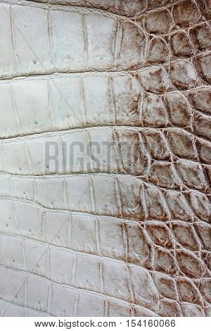 Crocodile skin, gray, yellow, made of crocodile skin. Fashion leather handbags hand-made natural pet farms, nature motifs skin textures skin backgounds.