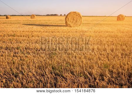 Field with bales of hay. Cloudless sky and horizon. Saving ecology is top priority. Picturesque beauty of homeland.