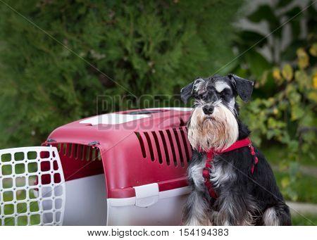Dog Beside Plastic Carrier