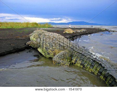 A Crocodile'S View Of The Shores Of Lake Chamo, Ethiopia