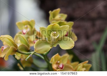 Colorful Orchids / Beautiful Colorful Orchid Flower in the orchid house