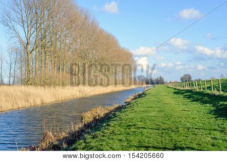 Row of tall and bare trees along a narrow canal next to an embankment dike separated by a fence from wooden poles and barbed wire on a sunny day in the winter season.
