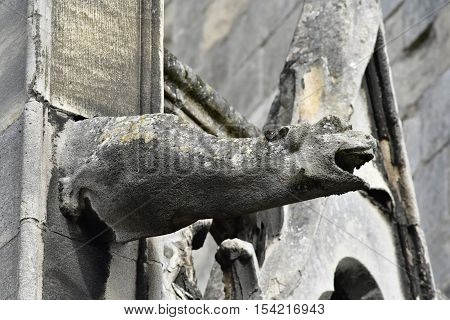 Mantes la Jolie; France - october 18 2016 : gargoyle of the gothic collegiate church