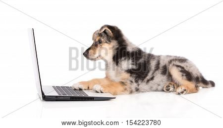 adorable mixed breed puppy working on a laptop
