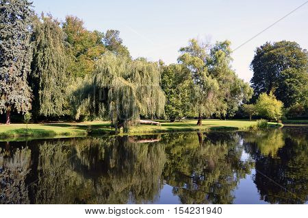 Green Park Landscape With Big Osier And Water Pond Photography