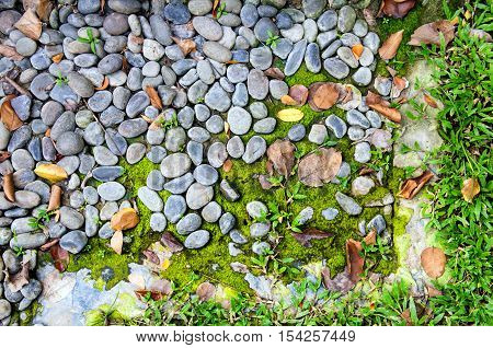 Ground with grass and rock in the garden