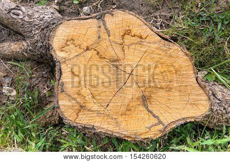Top view of tree stump - Stock Photo