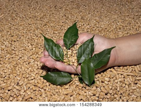 Wood pellets and green leaves in the женские hand . Biofuels, bio fuels, ECO-friendly fuel.Cat litter.