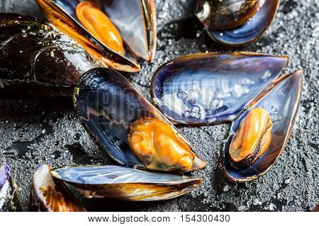 Closeup of freshly caught raw mussels on black rock