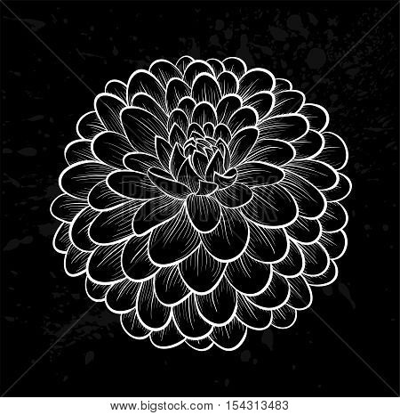 beautiful monochrome black and white dahlia flower on a vintage background with spray and spots.