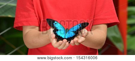 Hands Of A Little Girl Holds A Ulysses Swallowtail