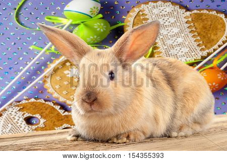 Rabbit, Bunny, Hare, Cony, Coney, Lapin