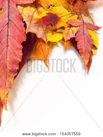 Autumn leaves are different different, elm, fall