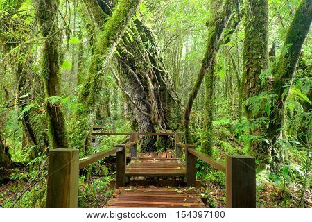 wooden bridge at misty tropical rain forest at Doi Inthanon Park Thailand